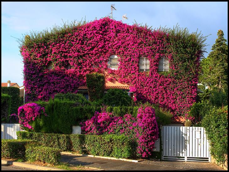 عکس خانه زیبا تهران